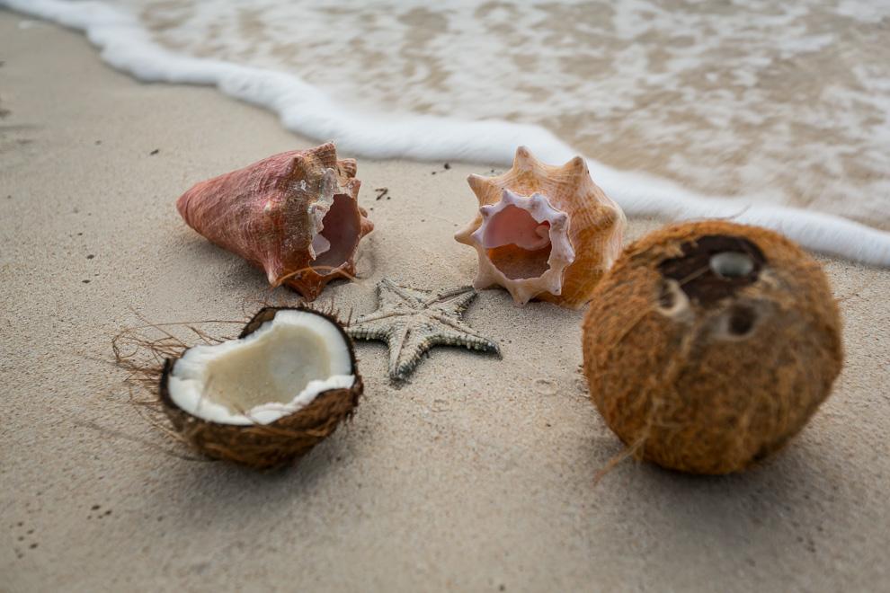 Panamá cuenta con costas tanto en el océano Atlántico como en el Pacífico, tiene un clima tropical, muy caluroso durante todo el año en las costas y tierras bajas, donde las precipitaciones son por lo general altas. (Tetsu Espósito)
