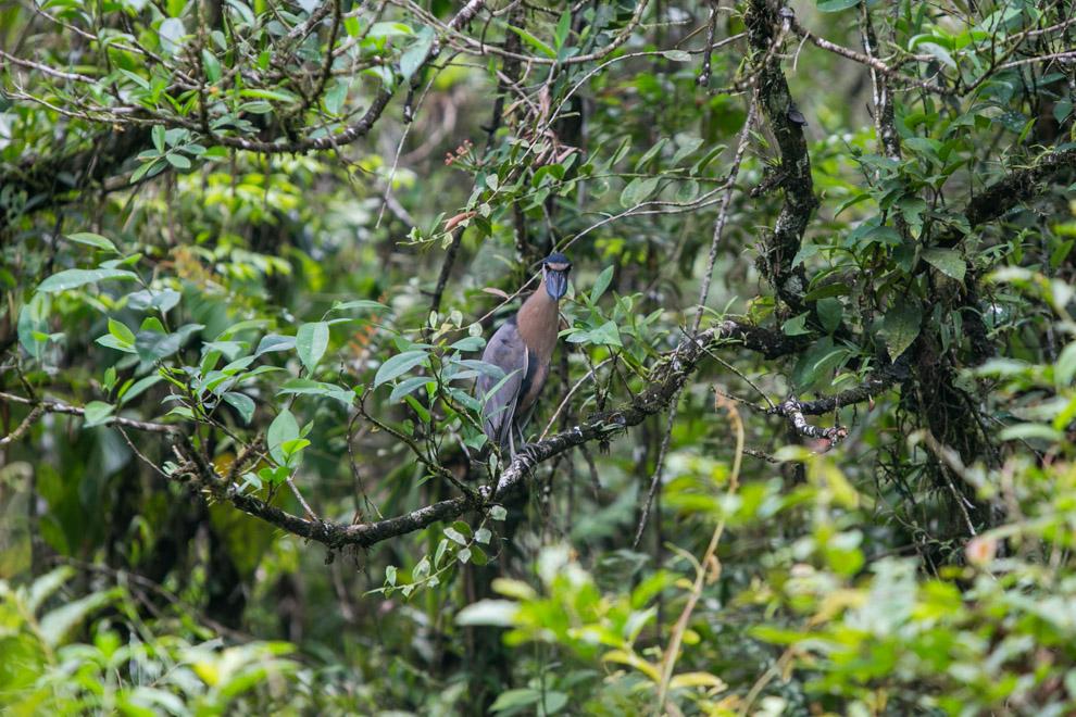 Las islas tienen bosques tupidos con altos niveles de precipitación, donde se pueden encontrar una gran variedad de aves. (Tetsu Espósito)