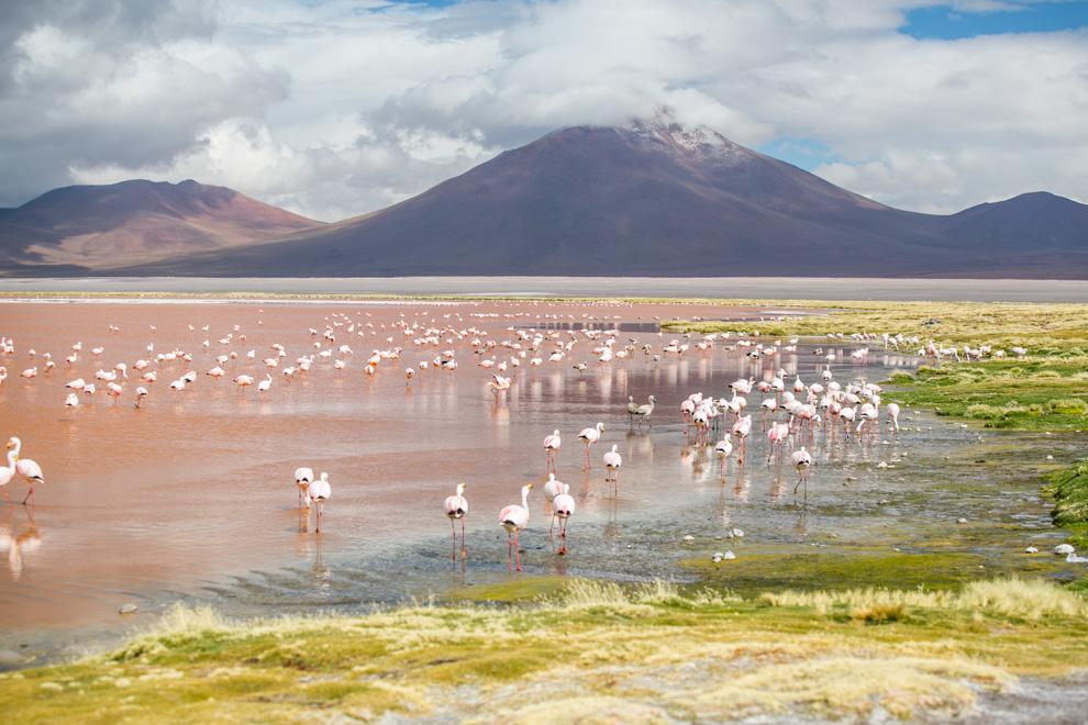 Laguna Colorada se encuentra dentro de la Reserva Nacional de Fauna Andina Eduardo Abaroa, Bolivia, en el altiplano potosino. Es un lugar de cría para los flamencos andinos, aves migratorias que se cuentan por miles en sus aguas ricas en minerales. (Tetsu Espósito)