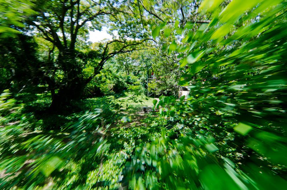 En San Bernardino, los turistas pueden realizar actividades de arborismo con la empresa Aventura Xtrema, cada participante es lanzado a realizar desafíos sobre los árboles y un final emocionante con la tirolesa. (Elton Núñez)