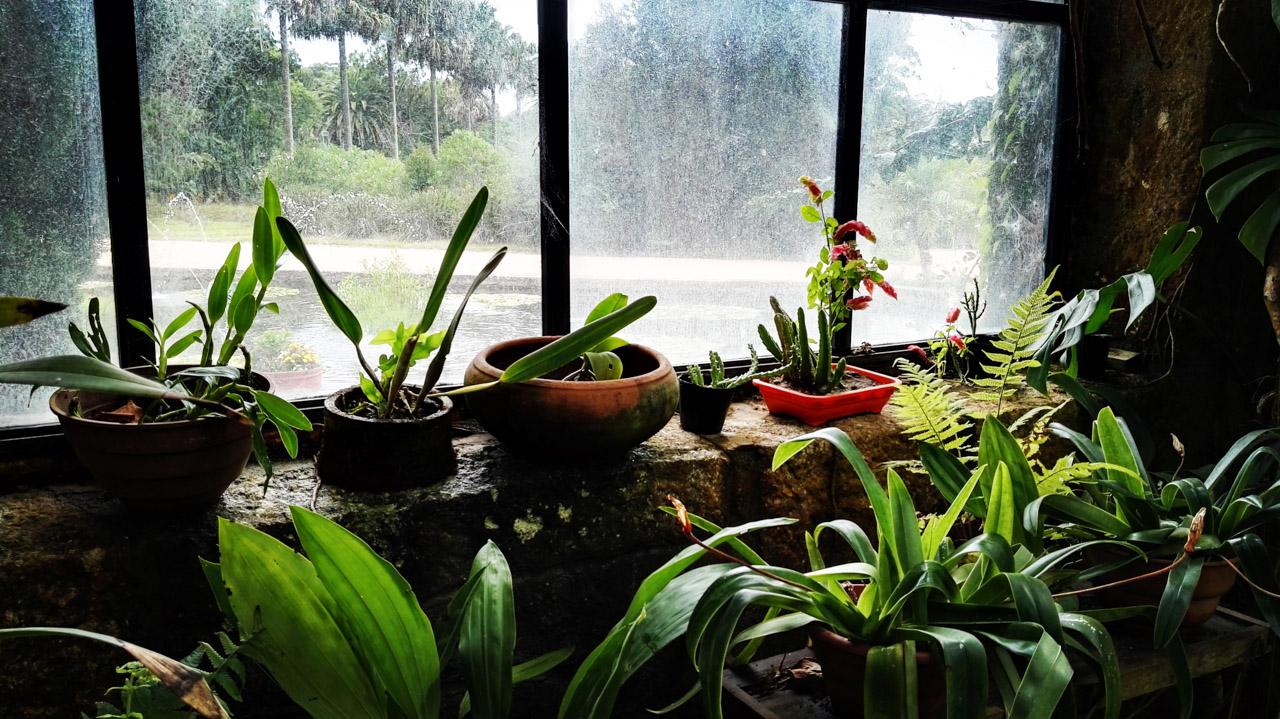 Plantas de todo tipo son exhibidas en el invernáculo del Parque Nacional Santa Teresa, donde se puede contemplar una colección impresionante de plantas. (Fotografía tomada con un smartphone Huawei P8, Elton Núñez)