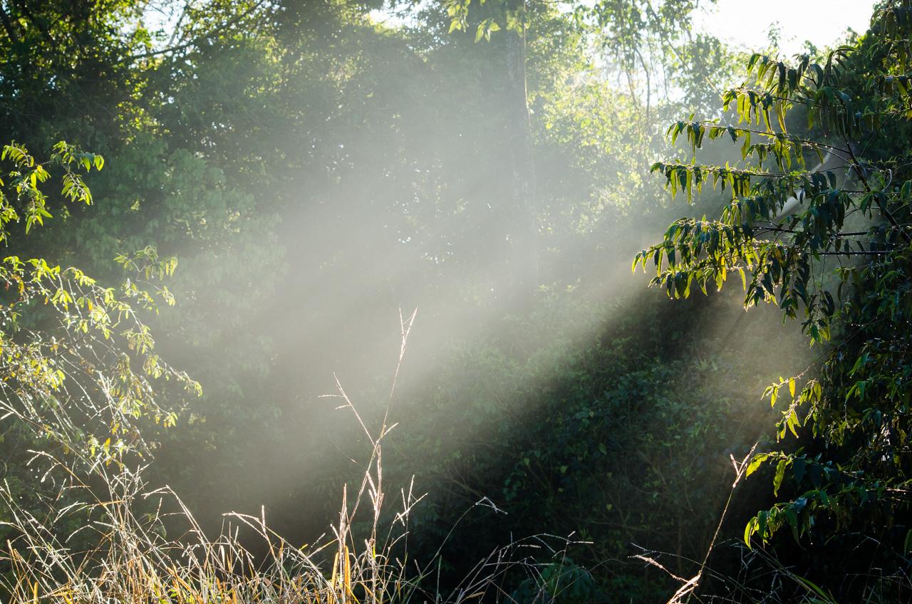 Rayos del sol penetran el bosque de la Reserva Morombí en nuestro primer día de cacería fotográfica. (Elton Núñez)