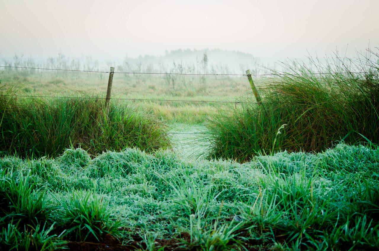 En los pastizales del camino a la Reserva Morombí se pueden ver escarchas y mucha neblina como vestigios de frías noches. (Elton Núñez)