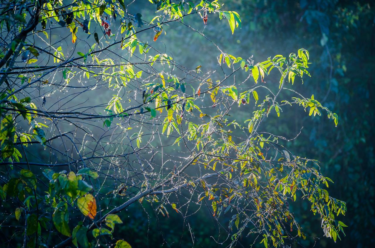 Las gotas de rocío que sobran en las hojas hacen rebotar las luces del sol, en una fría mañana de recorrido por el bosque de la Reserva Morombí. (Elton Núñez)