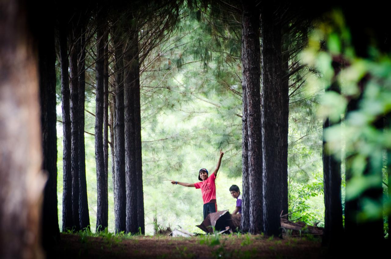 Niños se divierten en el bosque de pino dentro del predio que corresponde a la Compañía Minera Wanda S.R.L. Se encuentra ubicada en la localidad de Wanda (Misiones, Argentina) a unos 40 kilómetros de Puerto Iguazú y a 38 km de las Cataratas del Iguazú. (Elton Núñez).