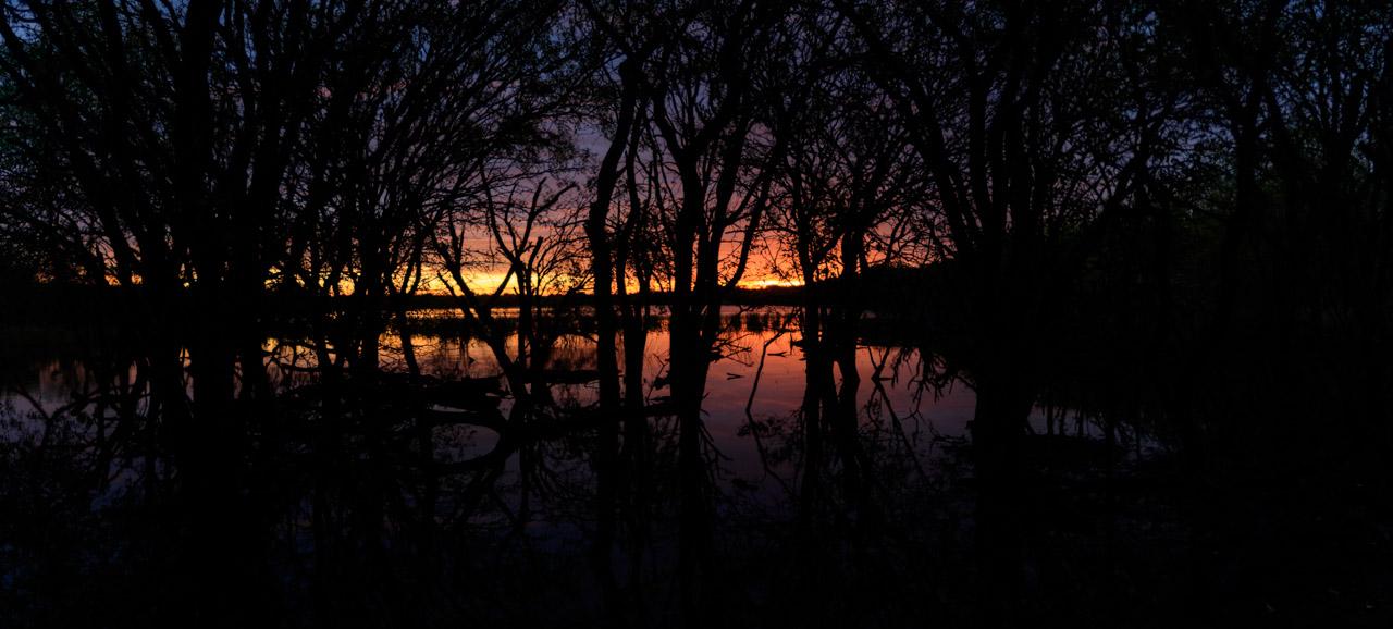 Un atardecer entre los árboles sumergidos en las aguas de Laguna Capitán. (Tetsu Espósito)