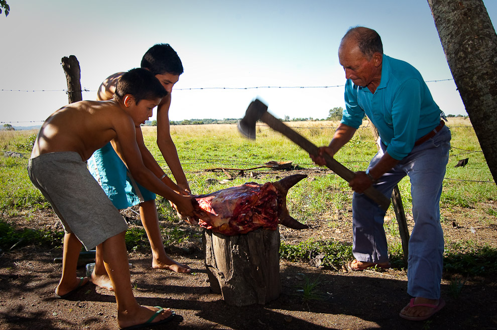 Un abuelo corta a hachazos por la mitad una quijada de vaca con ayuda de sus dos nietos, quienes posteriormente ayudaran al abuelo a sostener la cabeza mientras se extrae la carne mas importante que es la lengua. Campaña de Caapucú, Departamento de Paraguarí. (Elton Núñez, 2009)