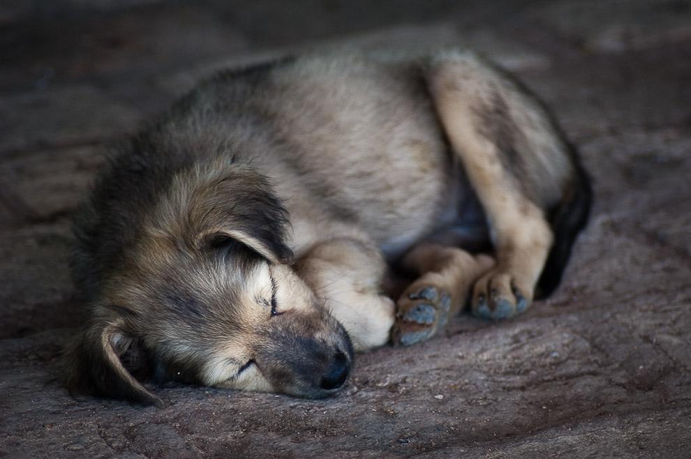 Cachorro durmiendo una placida siesta en una tarde en el Rancho de la familia Blanco. En la campiña de Caapucú, Departamento de Paraguarí. (Elton Núñez, 2009)