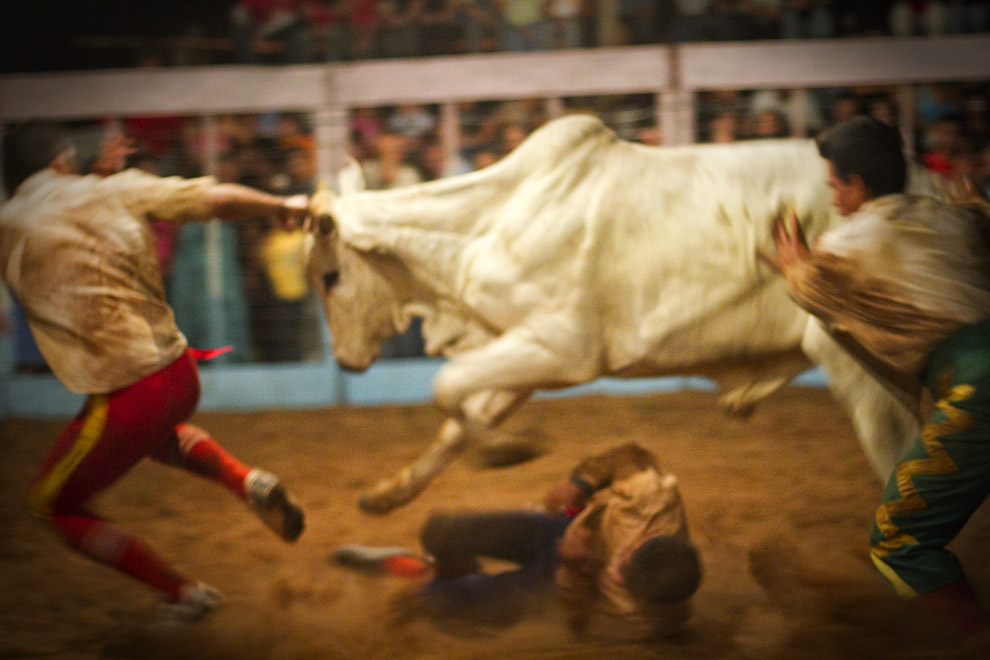 El torero cae al suelo con el peligro de ser golpeado por las fuertes patas del Toro en su intento de luchar cuerpo a cuerpo con el Toro. (15 de Agosto, Paraguay - Tetsu Espósito)