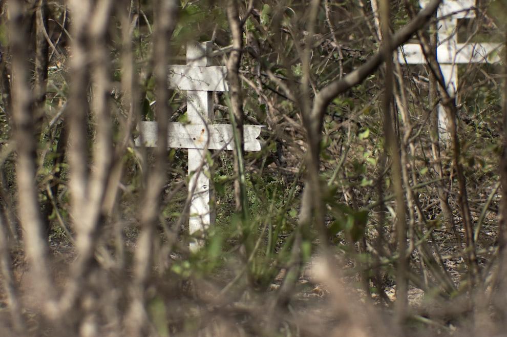 Cruces de soldados caídos enterrados en el cementerio del Fortín de Isla Poí, el cementerio es invadido por las plantas que se abren paso por el desierto árido del chaco Paraguayo. (Elton Núñez - Isla Poí, Paraguay)