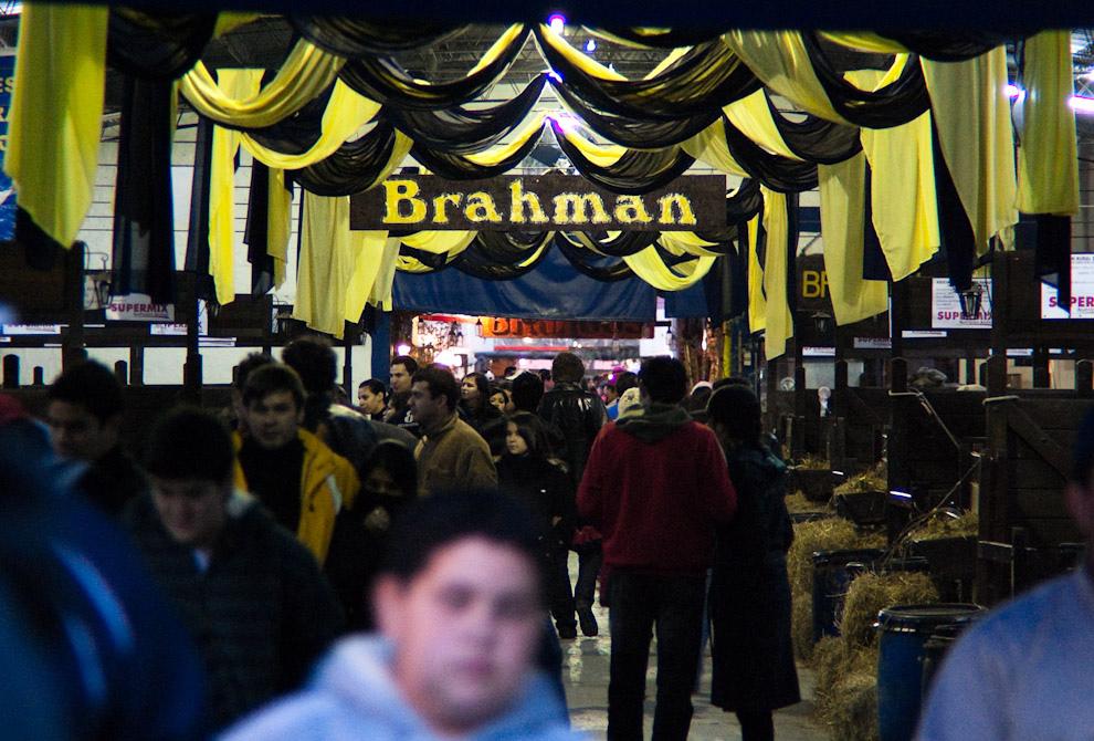 El establo de criadores de la raza brahman estuvo pintado de color aurinegro uno de los domingos de presentación de razas. (Elton Núñez - Mariano Roque Alonso, Paraguay)