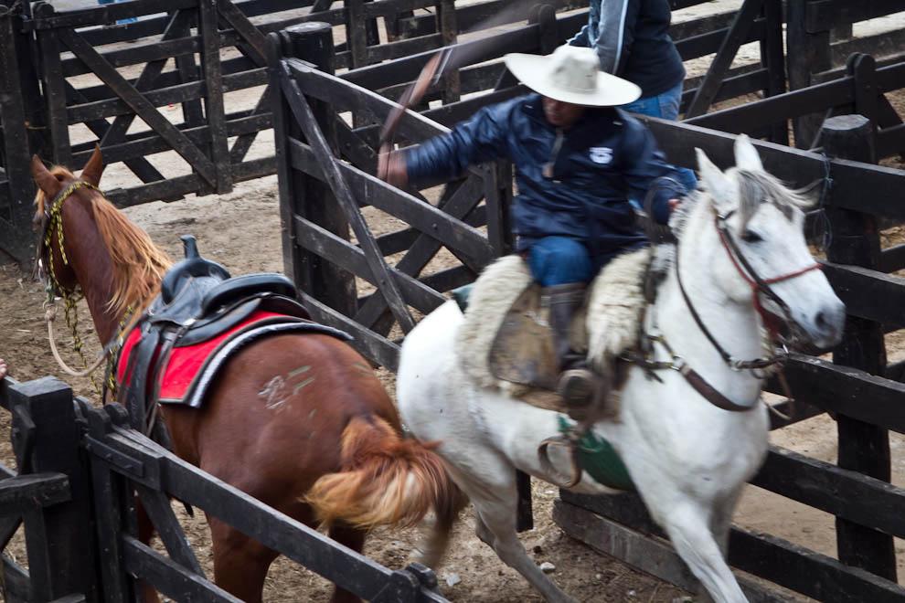 Un peón arrea a un caballo para llevarlo a un tinglado.  (Tetsu Espósito - Mariano Roque Alonso, Paraguay)