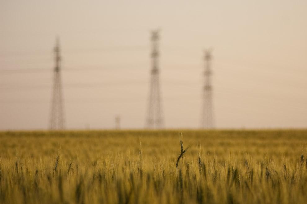 Trigo verde en los campos de Colonia Yguazú casi listos para darnos un buen año triguero, se estima que estaríamos almacenando entre 300 y 500 mil toneladas a ser cotizados a buen precio. En el fondo las grandes columnas de alta tensión que llevan energía a la Capital del País desde la Represa de Itaipú. (Elton Núñez - Colonia Yguazú, Paraguay)