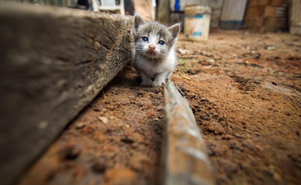 Un pequeño gato se refugia entre las maderas mientras los voluntarios trabajan en el cimiento de la vivienda. (Tetsu Espósito - Lambaré, Paraguay)