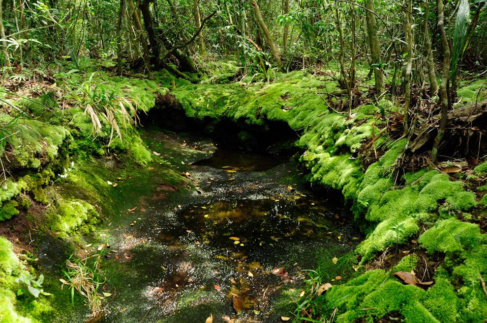 Mohos verdes cubren el suelo como una  alfombra, debido a la humedad existente en la naciente de agua mineral cerca de la cima del Cerro Naranjo. (Elton Núñez - Piribebuy, Paraguay)