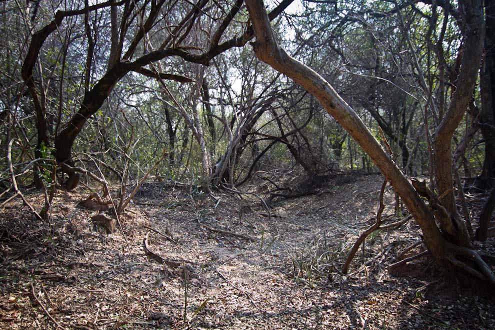 Casi 80 años después de la Guerra del Chaco, todavía quedan rastros de las trincheras utilizadas por las tropas paraguayas en las inmediaciones del Fortín Nanawa, Presidente Hayes. (Tetsu Espósito)