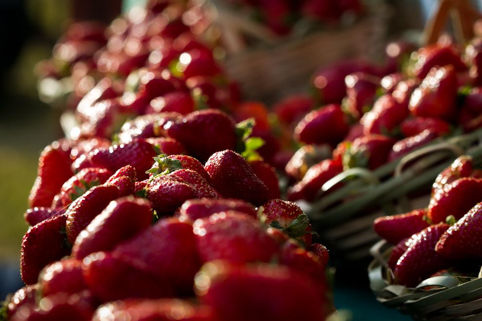 Las frutas maduras de un rojo intenso, se encuentran en exposición en todos los stands de la Expo Frutilla, a lo largo de la localidad de Estanzuela, a pocos kilómetros de Areguá. (Tetsu Espósito)