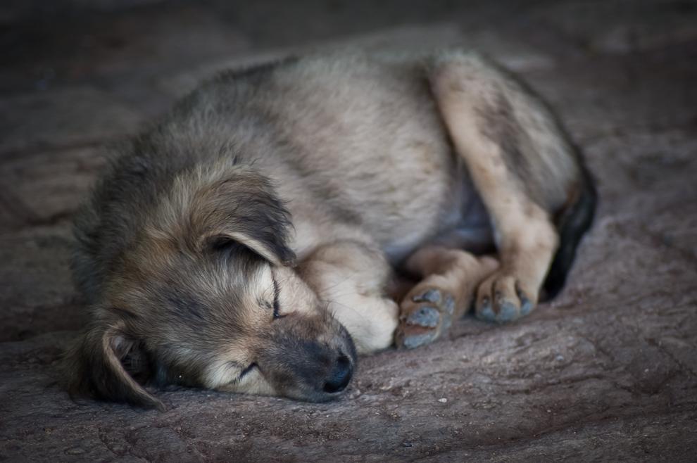 Un cachorro durmiendo plácidamente una tarde en el Rancho de la familia Blanco. En la campiña de Caapucú, Departamento de Paraguarí.(Elton Núñez)