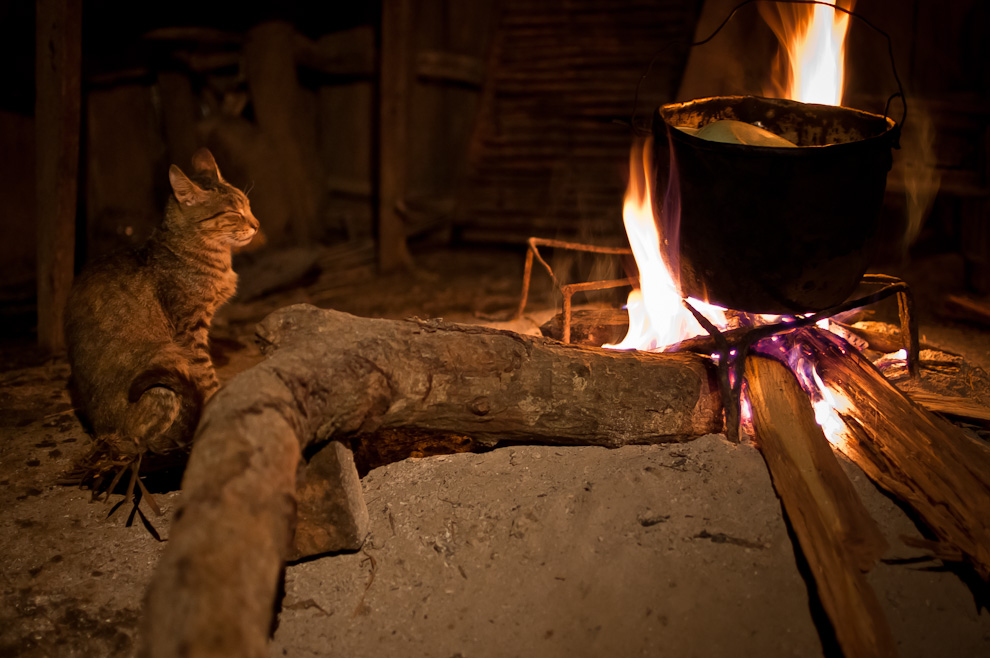 Un gato dormita frente a una fogata en una precaria cocina de un hogar en el campo, precisamente en las afueras de la ciudad de Caapucú, departamento de Paraguarí, mientras que se estaba cocinando un delicioso arroz blanco. (Elton Núñez)