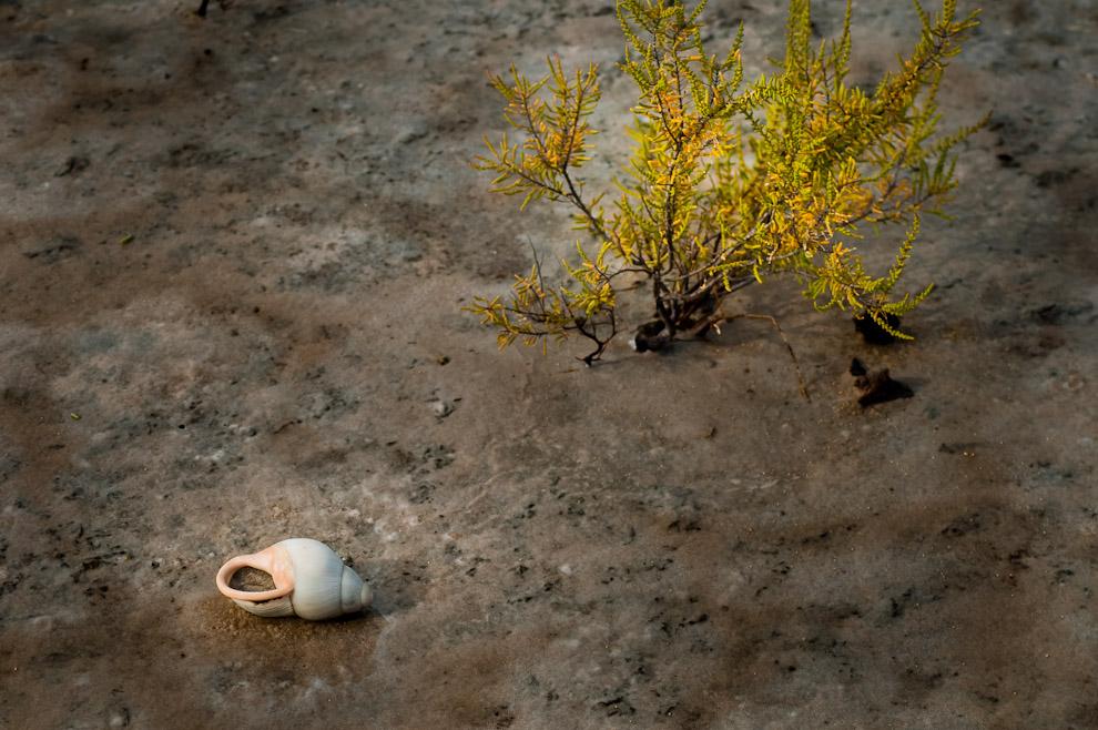 En el salado suelo cercano a las lagunas ya se pueden encontrar restos de caracoles y algunas ostras, como decorativos de una natural alfombra compuesta de arena húmeda, sal y plantas. Al ver estas imágenes se recuerdan aquellas numerosas teorías acerca del origen de las aguas del mar en nuestro territorio paraguayo. Pero según la Dirección de Recursos Hídricos de la Secretaría del Ambiente (SEAM), a través de estudios desarrollados a lo largo de los últimos 40 años señalan -en base a perforaciones y análisis de muestras- que las aguas subterráneas en el Chaco son saladas en un 75%. (Elton Núñez)