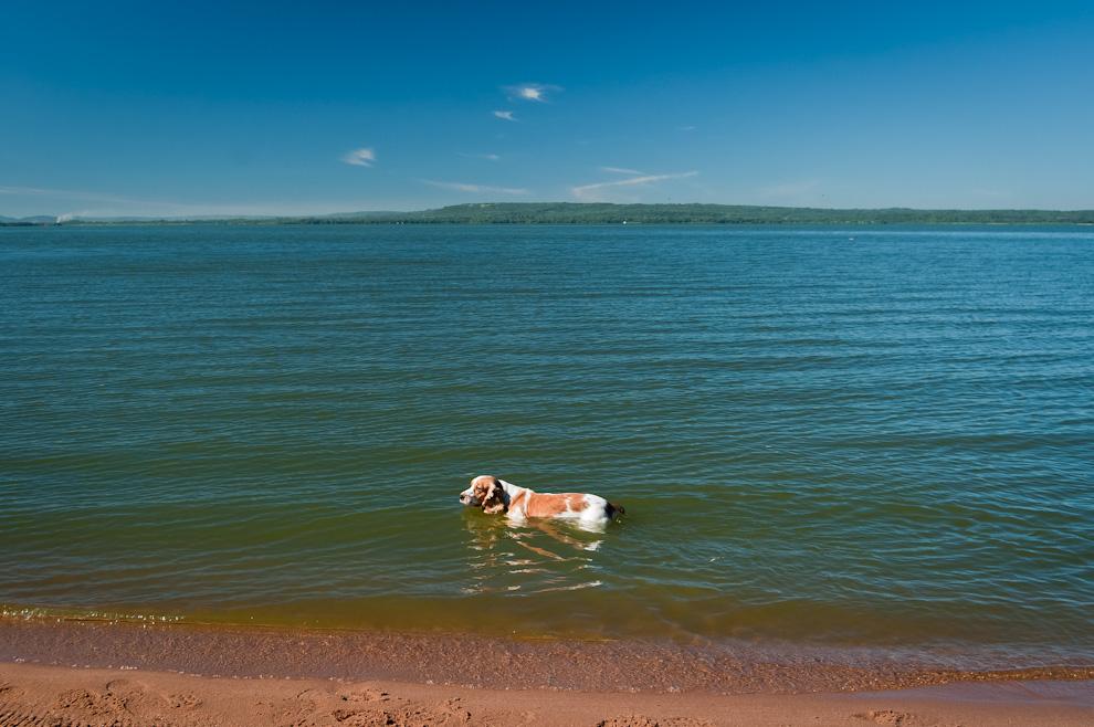 """Un perro se adentraba en las aguas del lago Ypacaraí apenas vió agua y sus dueños lo soltaron. Acompañaba a una familia que había venido hasta la ciudad de San Bernardino para participar del evento """"Amigos del Lago"""", una actividad que concentró a cientos de personas relacionadas con distintas profesiones pero interesados en denunciar y recoger información sobre la problemática de contaminación de dicho lago. (Elton Núñez)"""