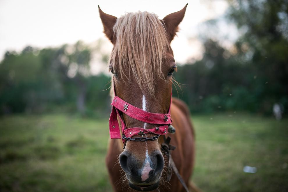 Este caballo aguarda a sus próximos pasajeros para darles un paseo por la playa municipal de Areguá.(Tetsu Espósito)