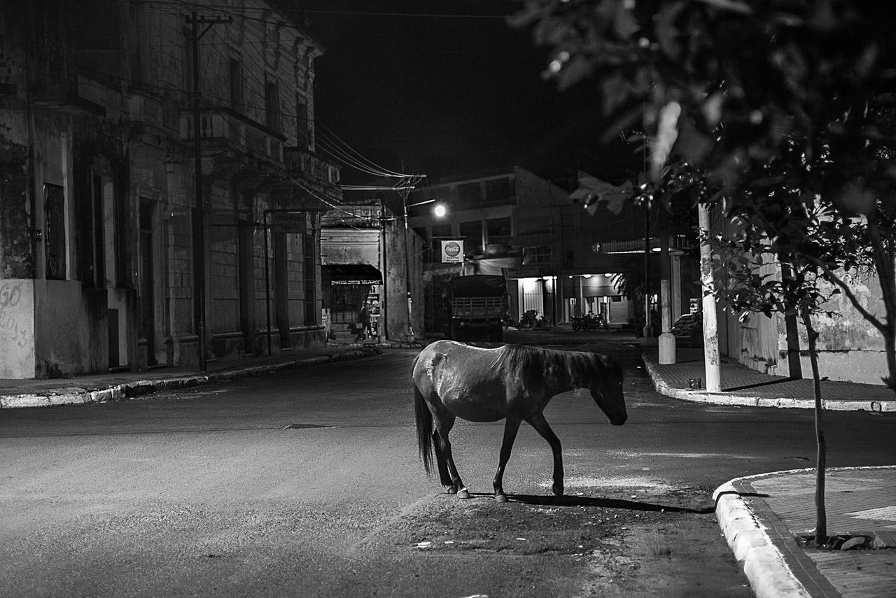 Un caballo solitario en el microcentro de Asunción, año 2013.