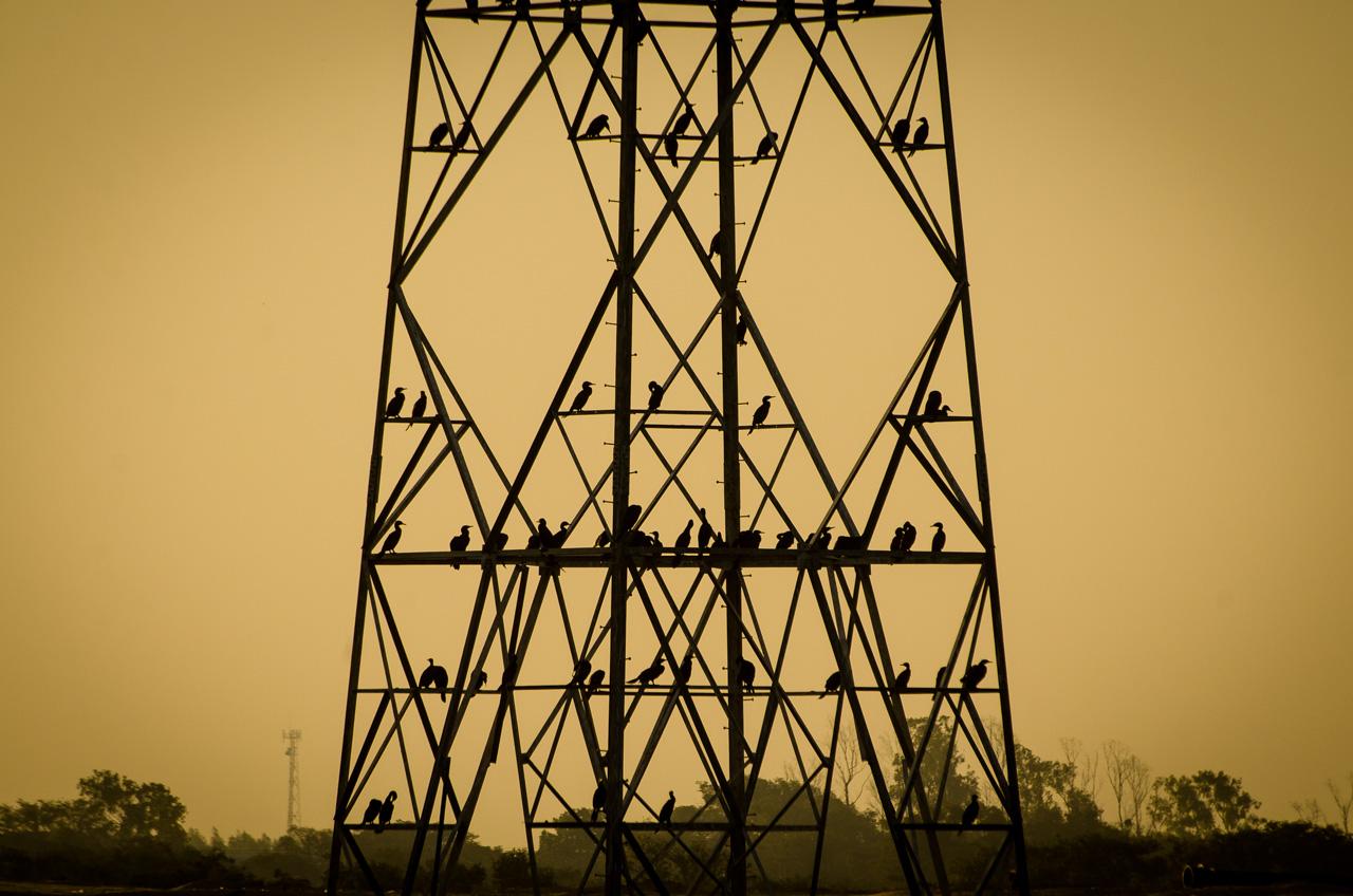 Cormoranes (Phalacrocorax brasilianus), se agrupan en una torre de línea de transmisión eléctrica, en la bahía de Asunción en una tarde de domingo, cerca de las obras de la próxima Costanera II. (Elton Núñez).