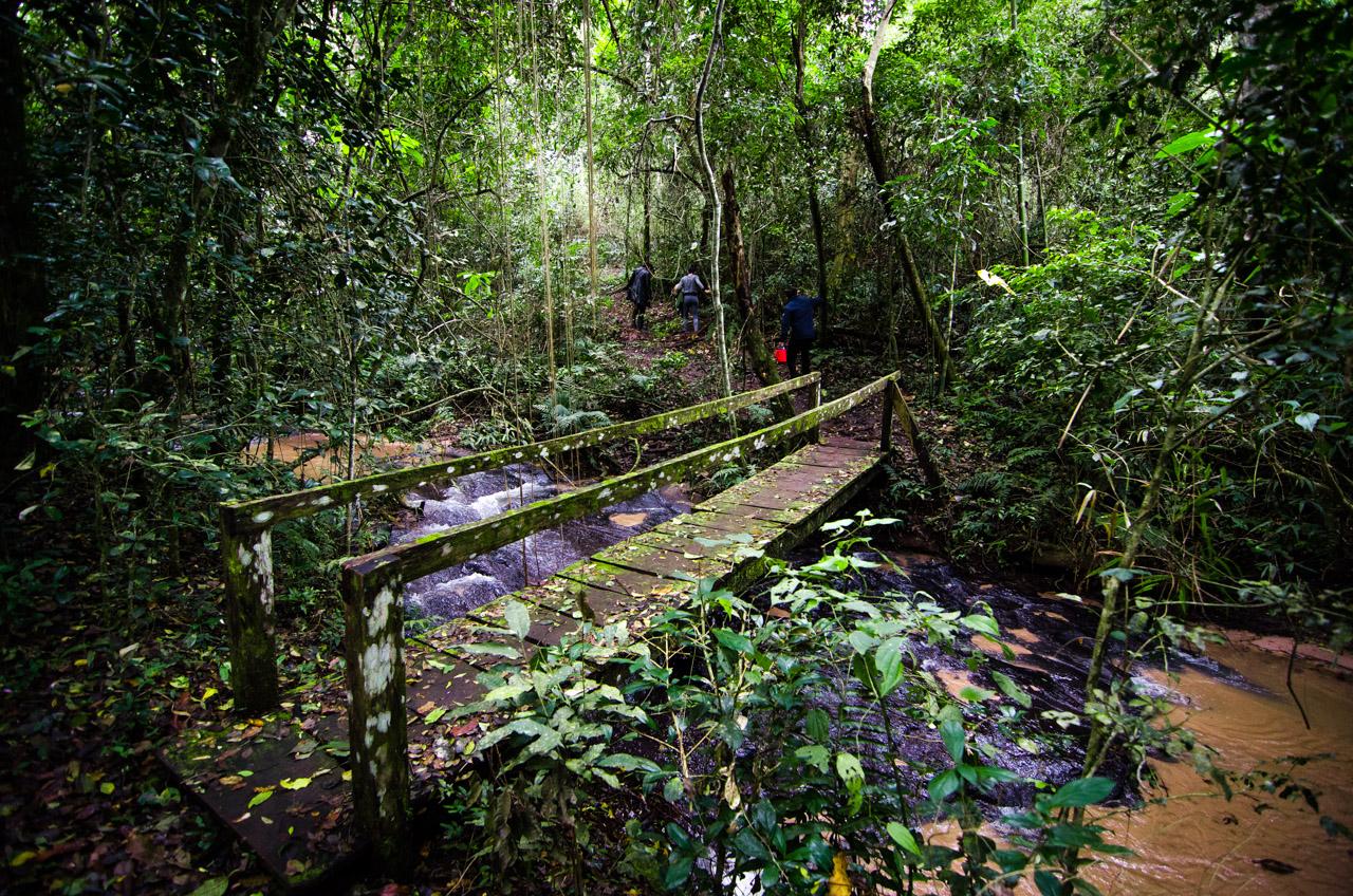 Puentes de madera fueron instalados para cruzar los arroyos cristalinos del bosque Mbaracayú, facilitando el caminar de los que se animan (independientemente de la edad) a hacer expediciones en lo más profundo del monte. (Elton Núñez).