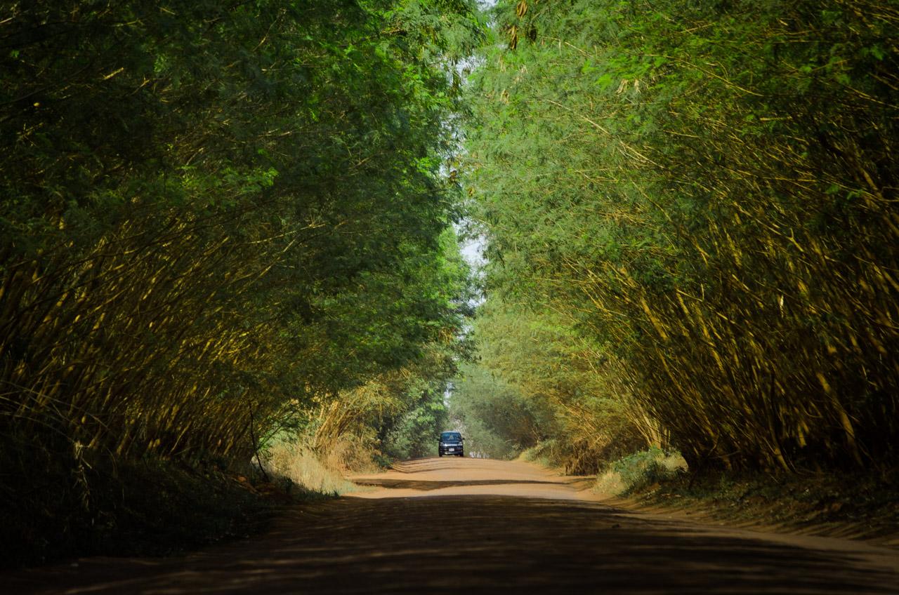 El camino a la Reserva Natural del Bosque Mbaracayú desde la ciudad de Curuguaty es aún de tierra, sin embargo hay algunas atracciones naturales que pueden disfrutarse como este túnel. Se estima que habrá ruta asfaltada en los próximos 2 años, lo que facilitará mucho la llegada de nuevos turistas hasta la reserva. (Elton Núñez).