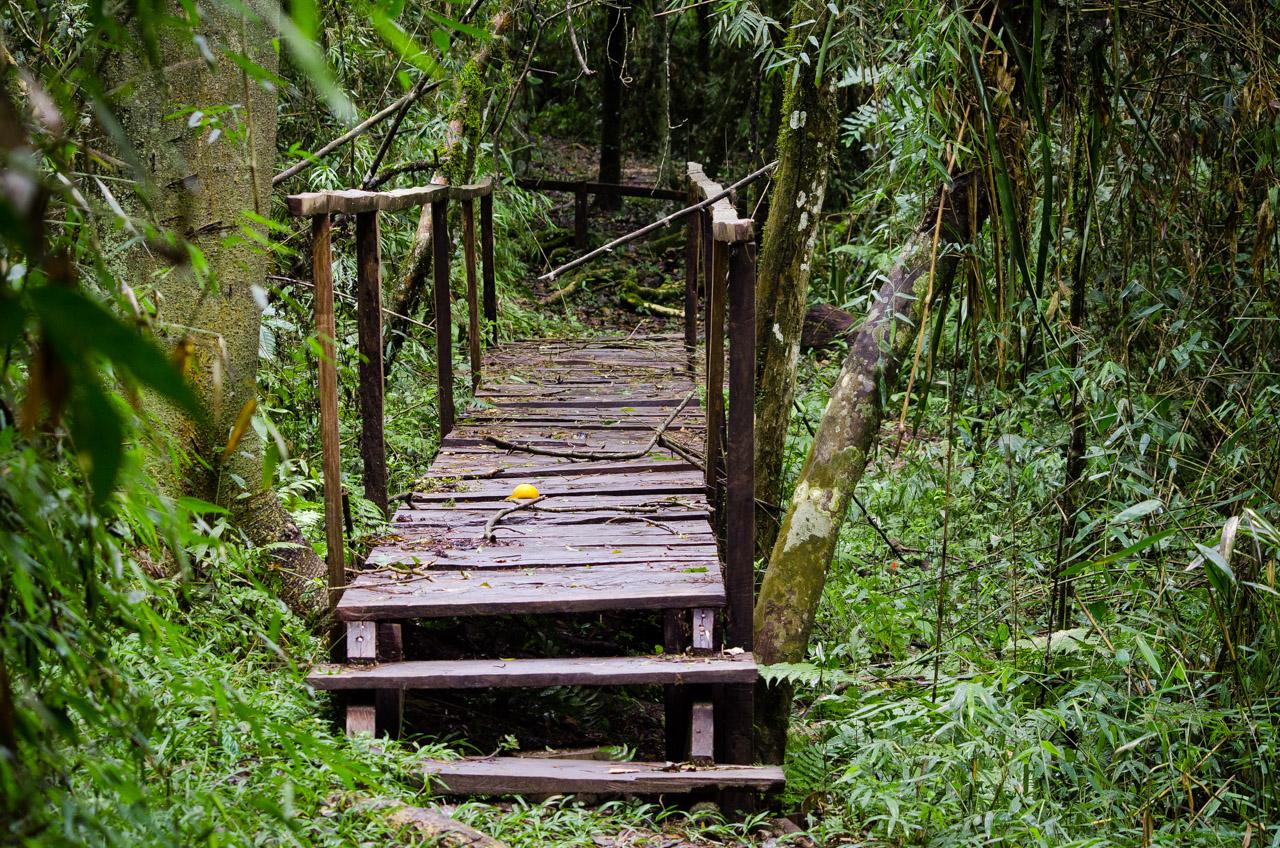 Otro puente de madera que facilita a los turistas realizar la caminata por el sendero Aguara'i, un trayecto de 1300 metros totalmente guiado y con muchas señalizaciones que enseñan los secretos del bosque. (Elton Núñez).