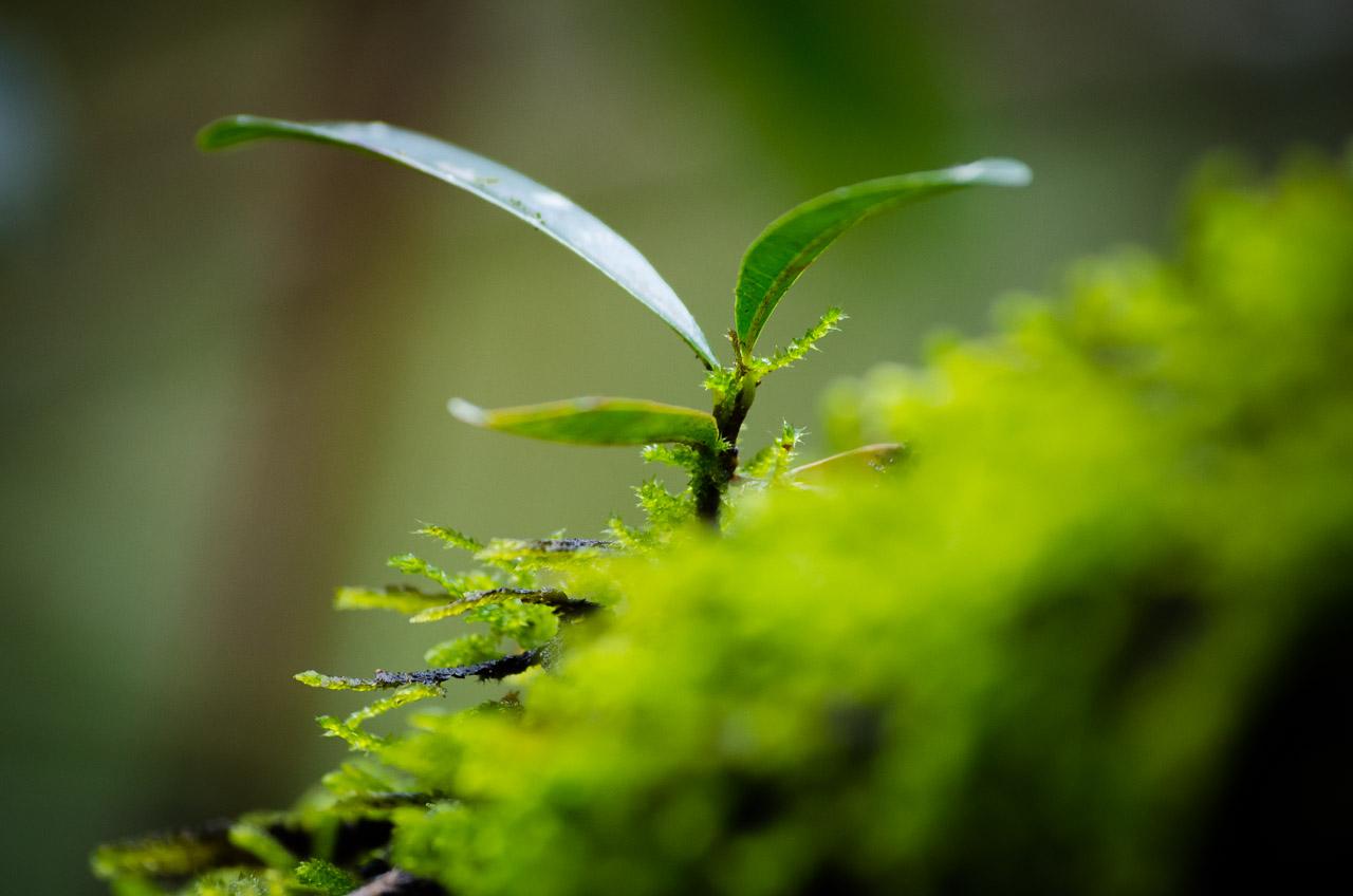 Otro detalle del bosque verde del Mbaracayú, plantas pequeñas muy verdes, musgos, hongos y helechos forman parte de una vegetación húmeda y abundante. (Elton Núñez).