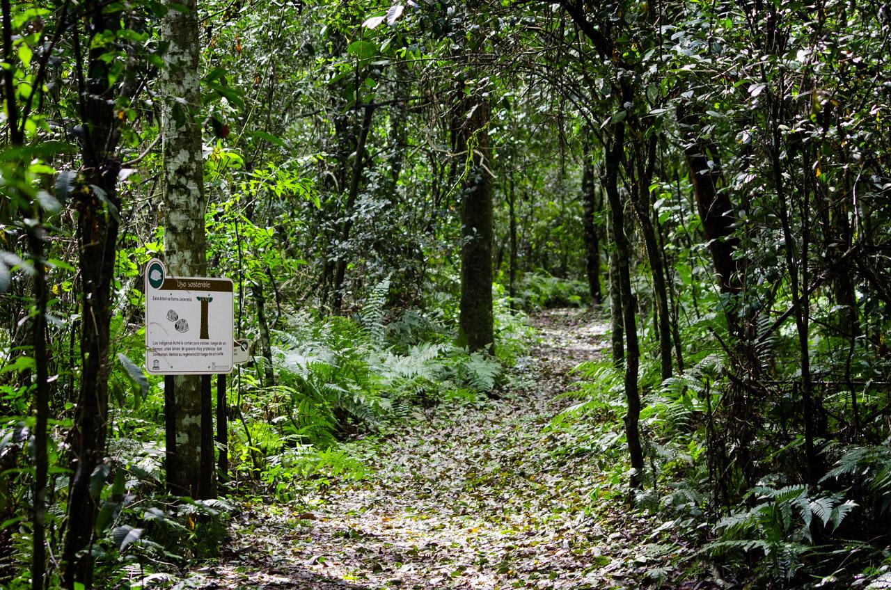 El sendero Aguara'i de la Reserva Natural del Bosque Mbaracayú, tiene 1300 metros de recorrido, está guiado por carteles y es rico en atracciones naturales. Los carteles fueron diseñados e instalados por la fundación Moisés Bertoni en su misión de educar y conservar. En la reserva existen varios otros senderos, algunos inexplorados que esconden la majestuosa naturaleza verde y viva. (Elton Núñez).