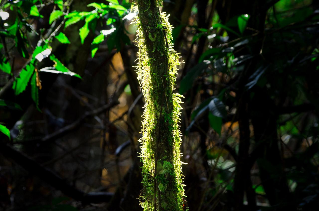 Todo tipo de plantas pueden ser vistos durante una caminata por los senderos del bosque Mbaracayú, el color verde se nota más fuerte luego de las refrescantes lluvias. (Elton Núñez).