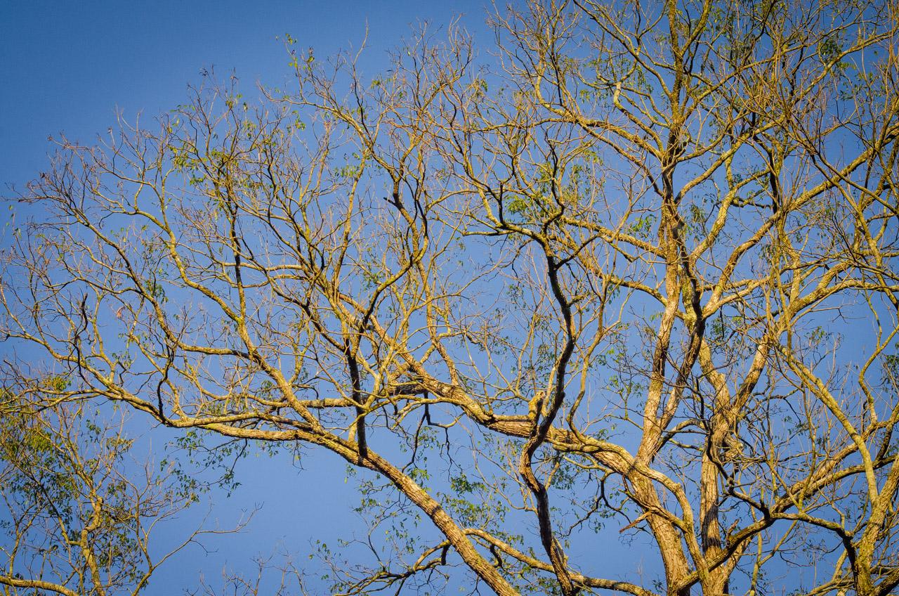 La copa de los árboles más altos del bosque Mbaracayú son las primeras en recibir los rayos del sol al amanecer. (Elton Núñez).
